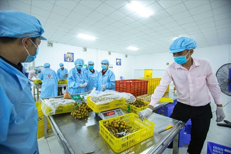 Xuất khẩu của Việt Nam sang Mỹ tăng mạnh
